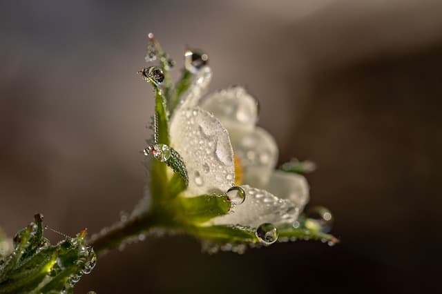 Photo of a flower with raindrops. Macro photography with Rebel T6i.