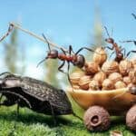 A photograph of ants: An example of finding one's personal photography style